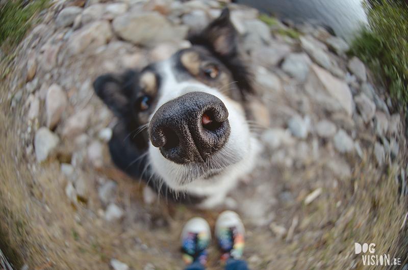 dog photography fisheye, hondenfotografie, www.DOGvision.eu
