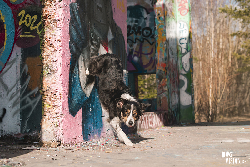 #TongueOutTuesday (16), hondenfotografie Fenne Kustermans, DOGvision Dalarna Zweden, yoga, graffiti, Border Collie, www.DOGvision.be