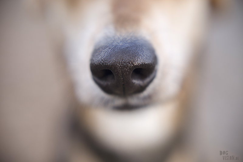 Dog nose close-up, www.DOGvision.eu