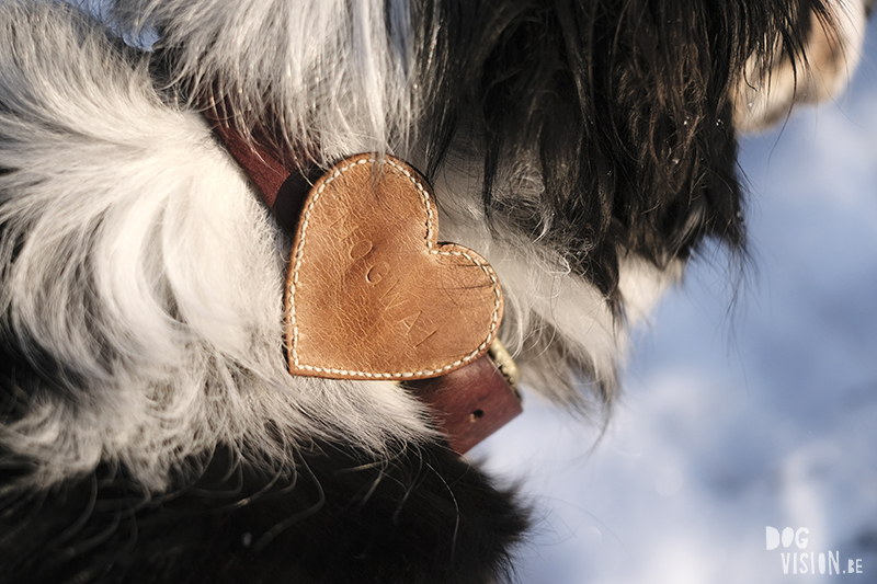 DIY dog Valentine, leather heart for dog collar, creative dog lover, www.DOGvision.eu