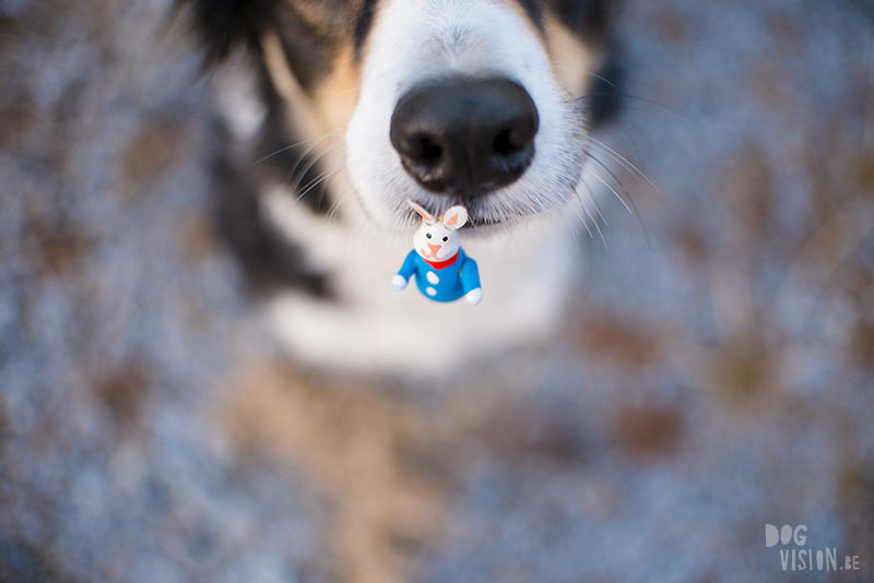 Dog and Easter bunny, happy Easter Border Collie Sweden, www.DOGvision.eu