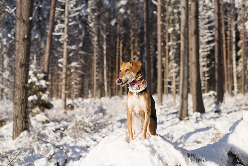 weekly dog blog post, dog photographer Sweden, hiking with dogs in Sweden, snow fun with dogs, www.DOGvision.eu