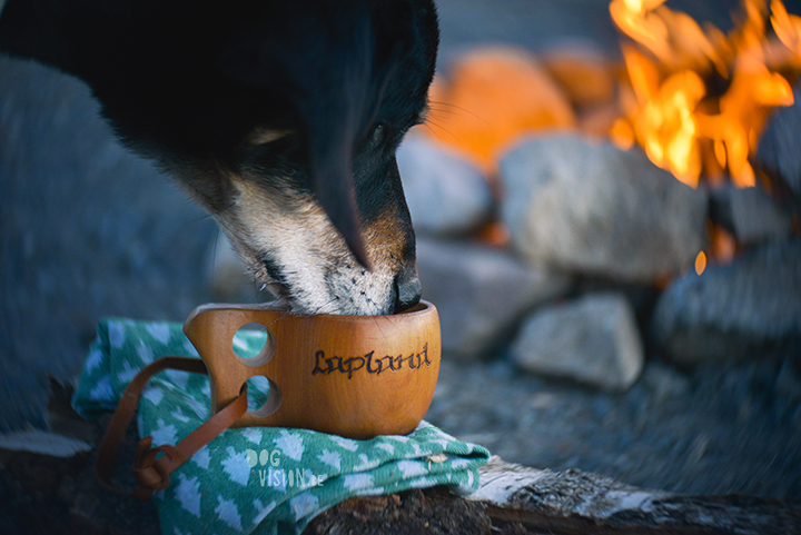 Camping with dogs | Review of Lensbaby twist 60 and sweet 35 | dog photography & blog at www.DOGvision.be