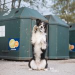 dog training anywhere, local recycle station, border collie training, fit dog challenge, dog trick, dog photography Sweden, www>DOGvision.eu