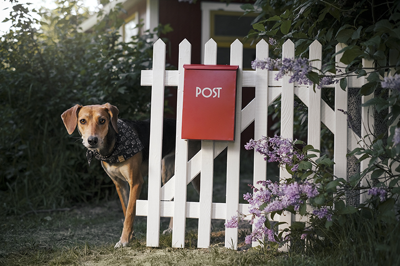 Dog adventure stories, dogs on adventure, mondo cane, red mailbox, conceptual dog photography, dog illustration, www.DOGvision.eu