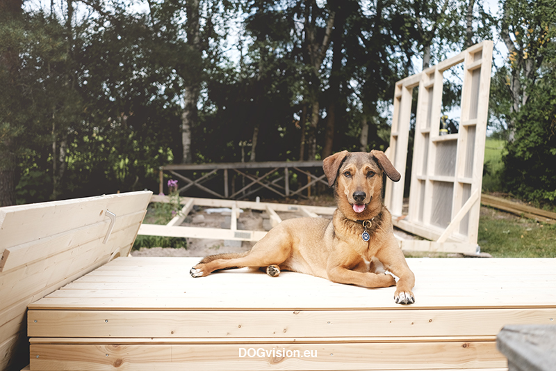 Fenne Kustermans, building a cabin in the garden, cabin project, dog photography Sweden, dog photographer, www.DOGvision.eu