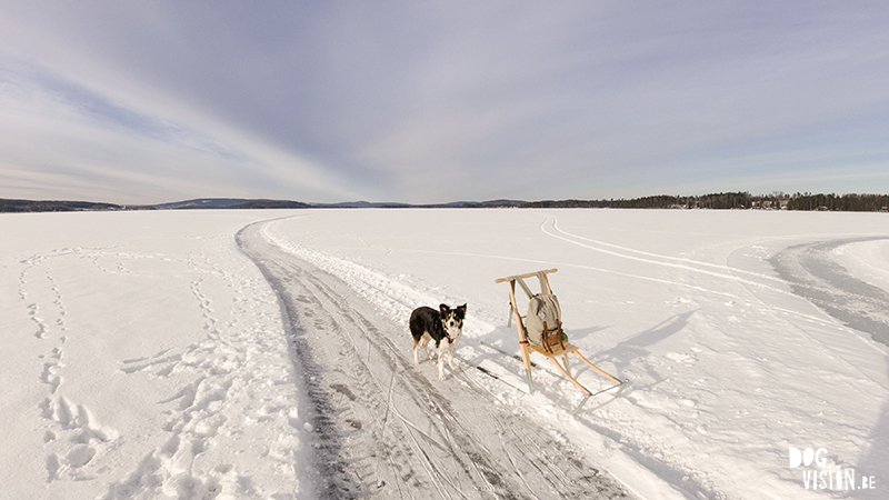 Kicksled (spark) Sweden, running with dogs, lake life, Dalarna, winter outdoor activities, www.DOGvision.eu