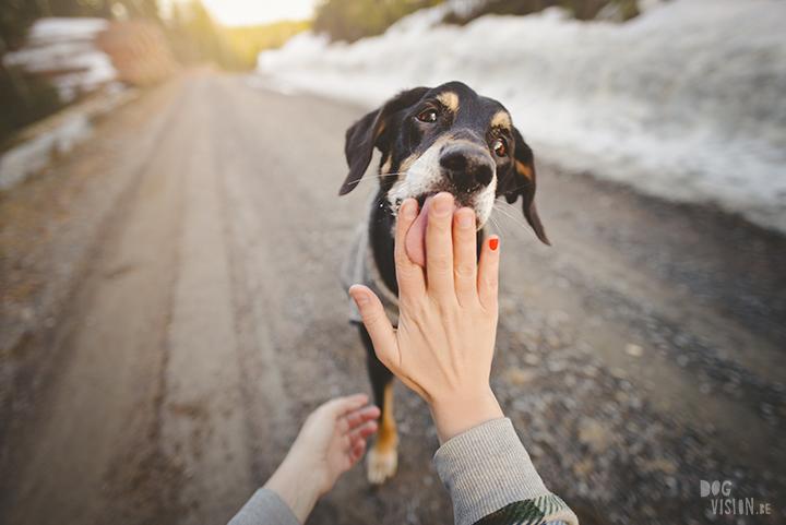 #TongueOutTuesday (16), hondenfotografie, leven in Zweden, avontuur met honden, Dalarna, fototips, www.DOGvision.be