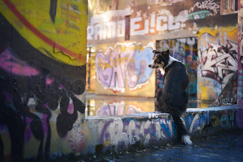 An urban looking graffiti shoot in the woods | creative dog photography | www.DOGvision.eu