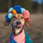 #TongueOutTuesday (03), dogvision dog photography in Eurpe Sweden, dog birthday shoot with diy pompoms, www.DOGvision.eu
