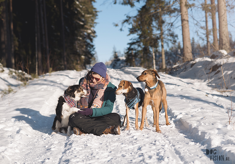 dog blogger and photography, hiking with dogs in Sweden, www.DOGvision.eu
