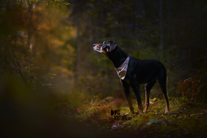 Photoshoot in the forest with the dogs | sunbounce | Sweden | dog photography & blog on www.DOGvision.eu