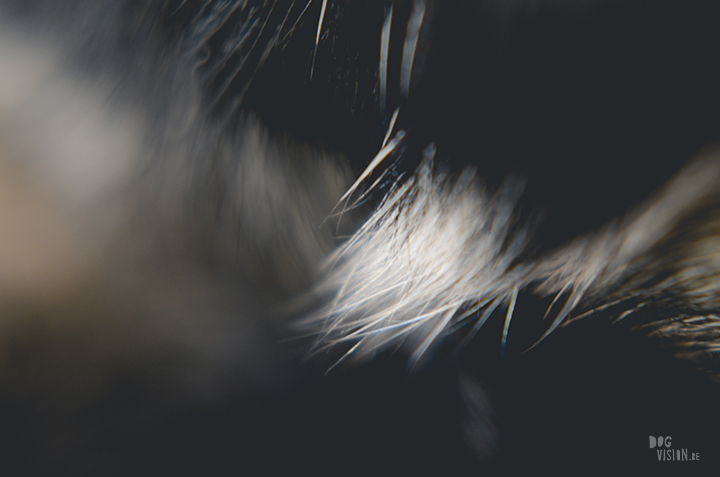 Close up dog nose and fur, memories, dog blog, dog photography, www.DOGvision.eu