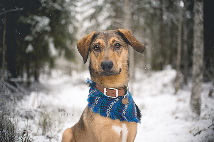 DIY dog bandana for Oona | dog blog and photography on www.DOGvision.eu