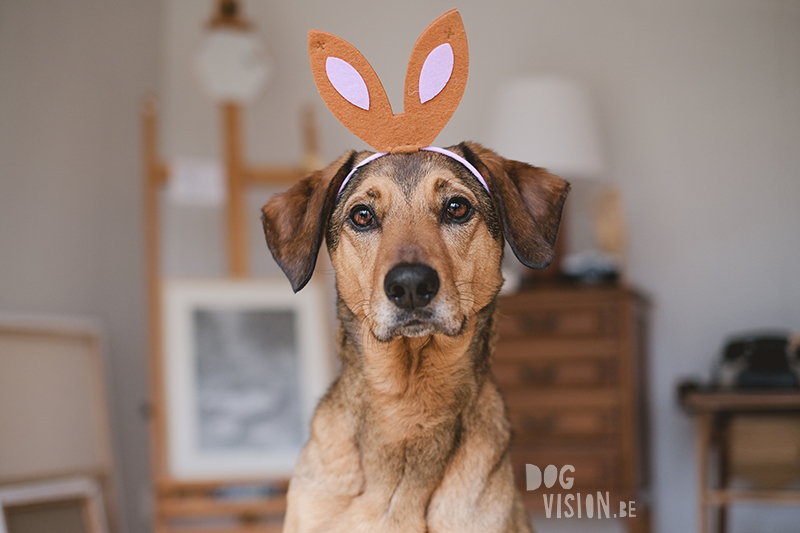 Happy Easter, Easter dog photo, Easter photoshoot ideas, cabin hound, dog photography Europe, Sweden, Dalarna. www.DOGvision.eu