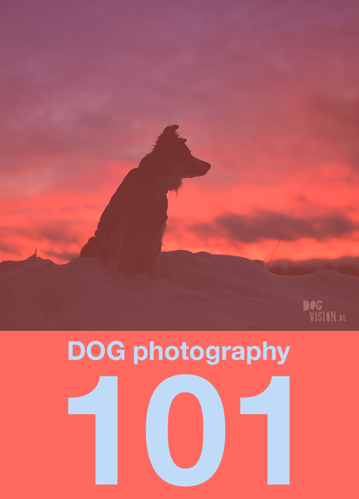Dog photography 101 |www.DOGvision.be | dog photography tips & tricks