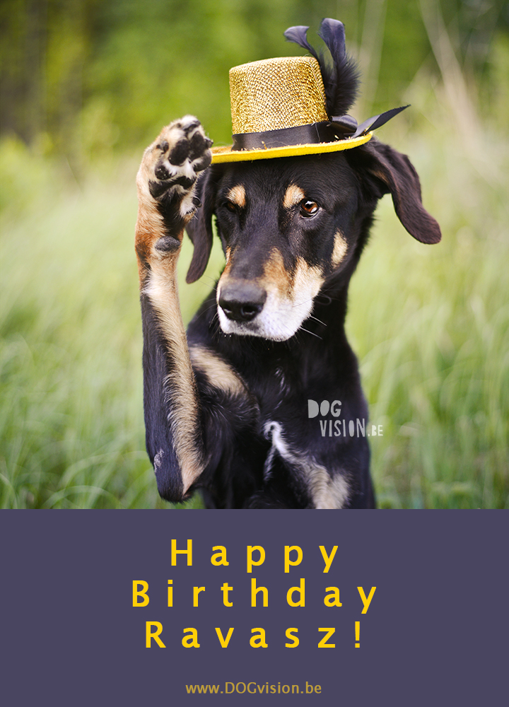 Cupcakes for a birthday dog | Ravasz Transylvanian hound| Blog & dog photography tips on www.DOGvision.be