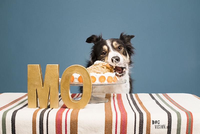 Verjaardag hond, Border Collie, www.DOGvision.be