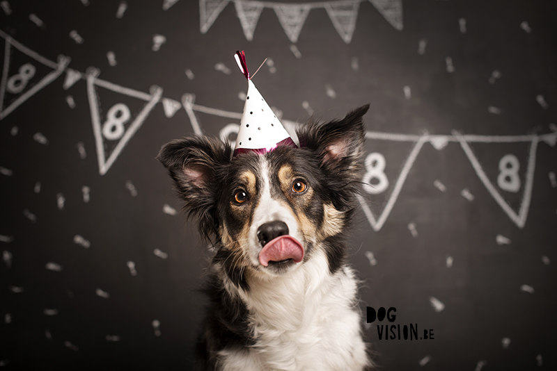 #TongueOutTuesday (09), Mogwai Border Collie dog birthday, dog photography, dog blog, hiking dogs in Sweden, www.DOGvision.eu