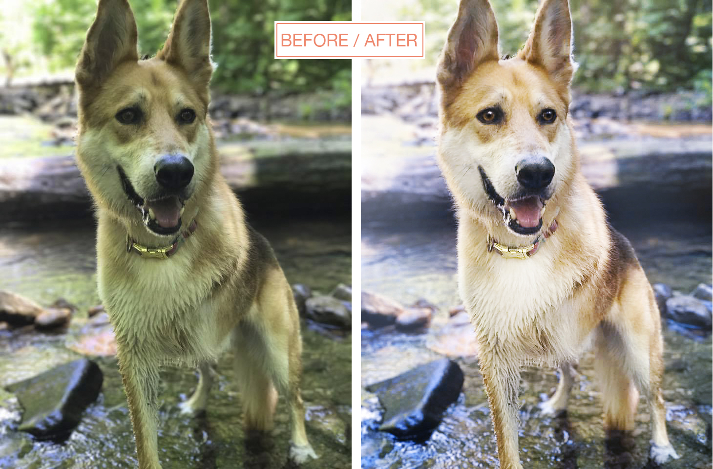Before/after | photoshop edit of photo by @casthecarolina | edited by www.DOGvision.be