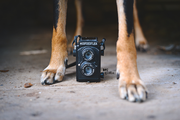 How to find your own photographic style? | dog photography tips & tricks on www.DOGvision.be