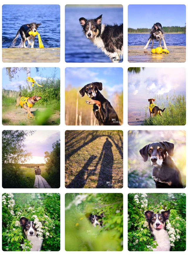 DOGvision | dogs of instagram, how to get started | www.DOGvision.be