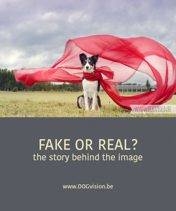 Fake or real, the story behind the photograph | www.DOGvision.be | dog photography