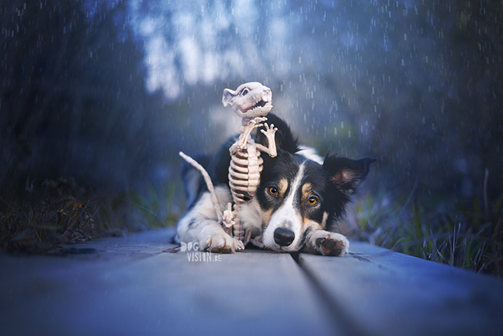 Halloween dog 2017 | dog photography | Border Collie | www.DOGvision.eu