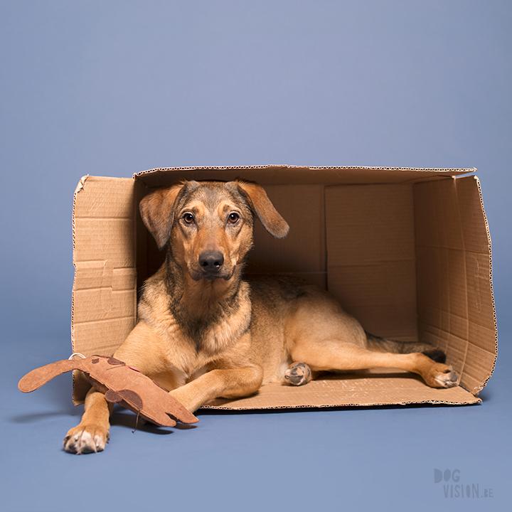 Studio dog photography | Dalarna, Sweden | rescue dog and dog blog | wwww.DOGvision.eu