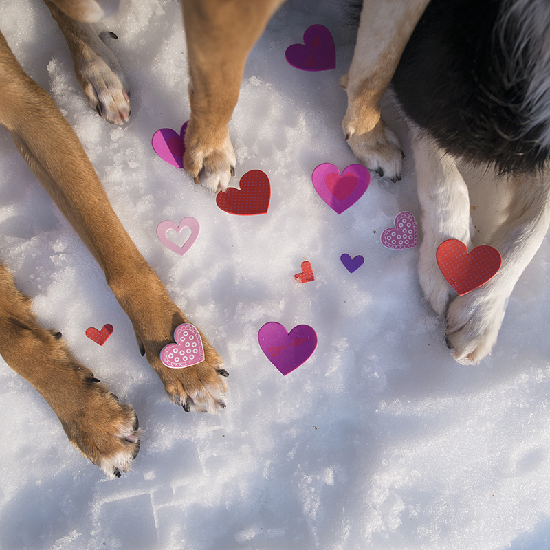 Valentine dogs, www.DOGvision.eu