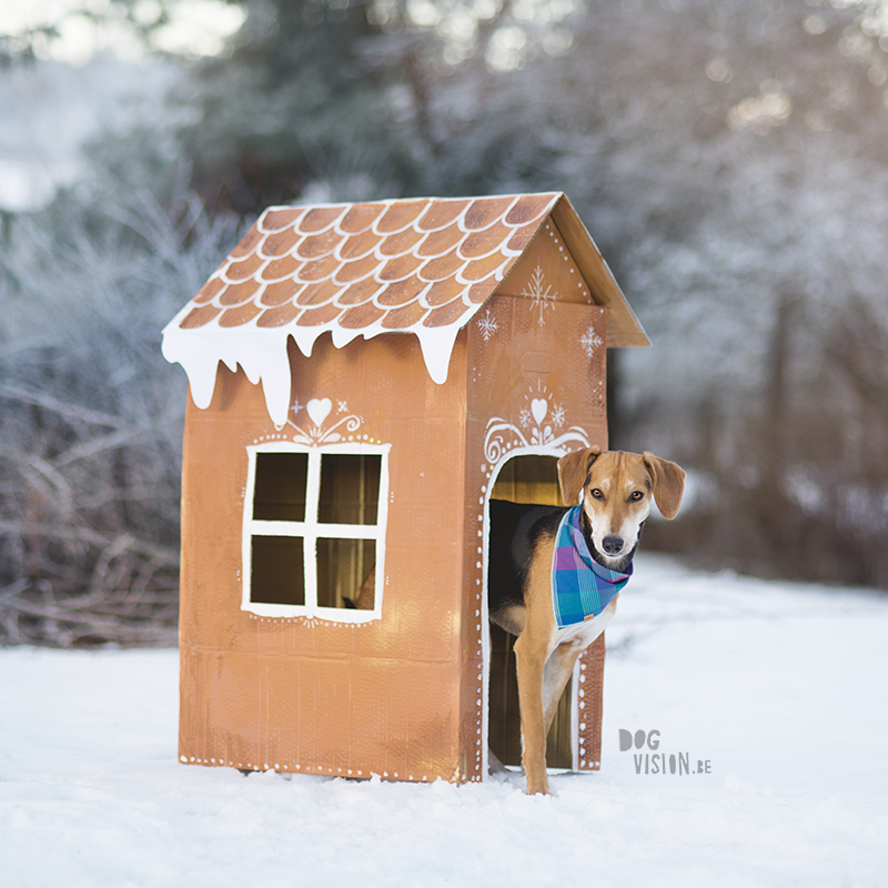 Gingerbread house day, December 12th, dog holiday photo shoot ideas, www.DOGvision.eu