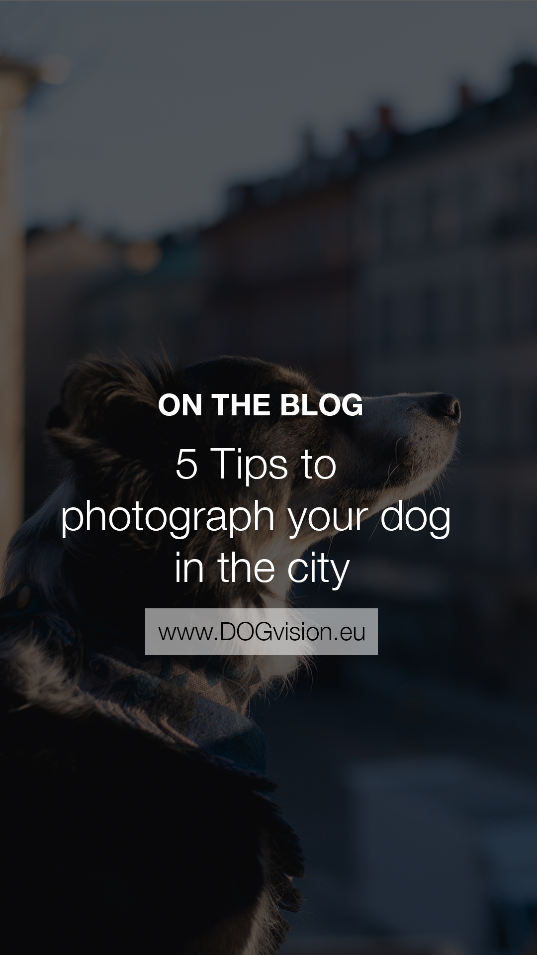 5 tips on photographing your dogs in the city, dog photography, Sweden, Dalarna, creative dog photography, www.DOGvision.eu