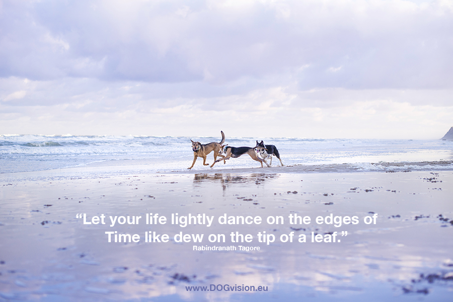 Fenne Kustermans, DOGvision, dog photographer, colorful dog photography, Monday motivation quote.