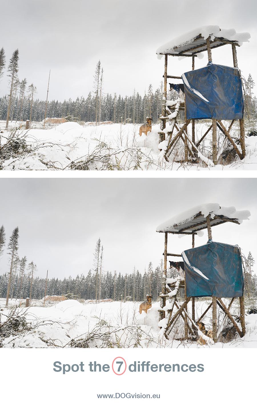 Zoek de 7 verschillen| Hondenfotografie, leven in Zweden, winter, honden| www.DOGvision.be