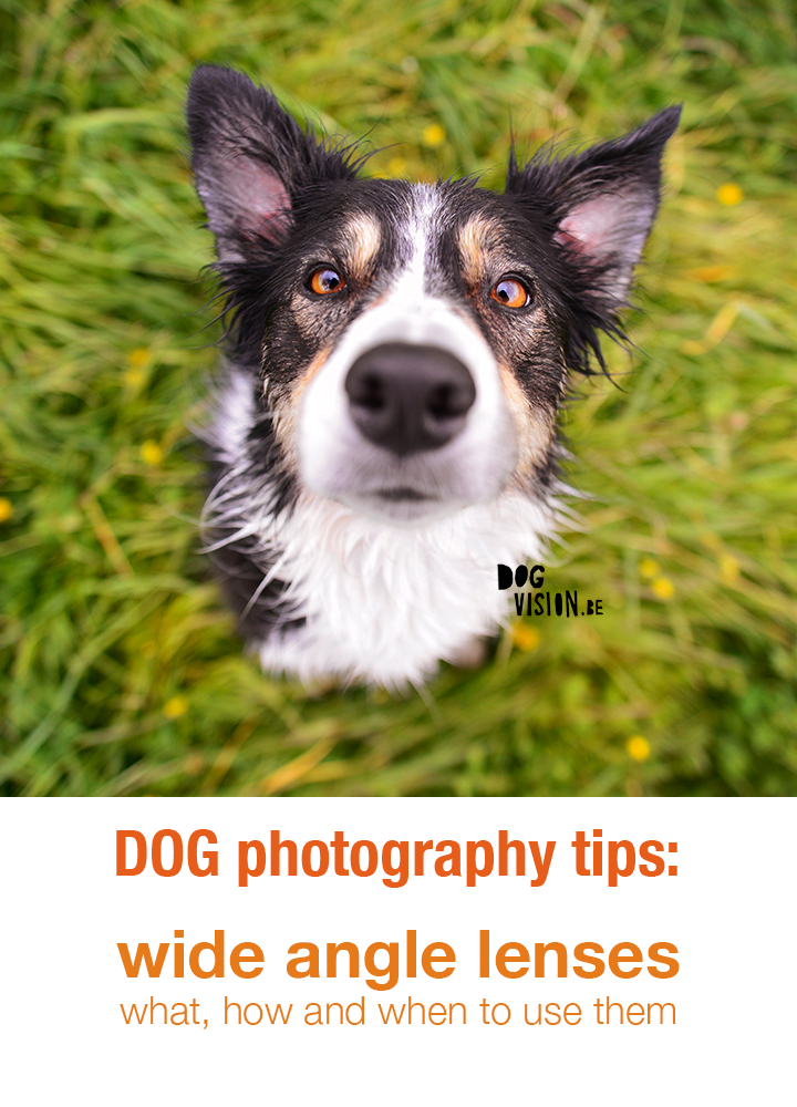 Dog photography tips & tricks | wide angle lenses for dog photography | www.DOGvision.be